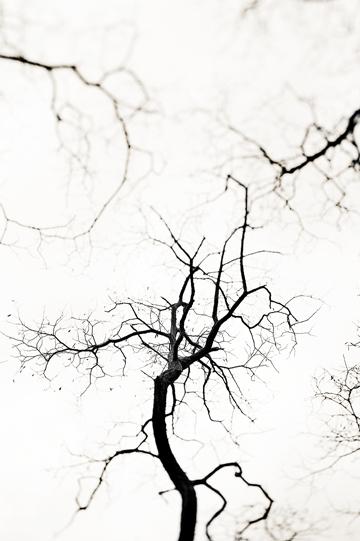 """""""Three Trees"""" 2009"""