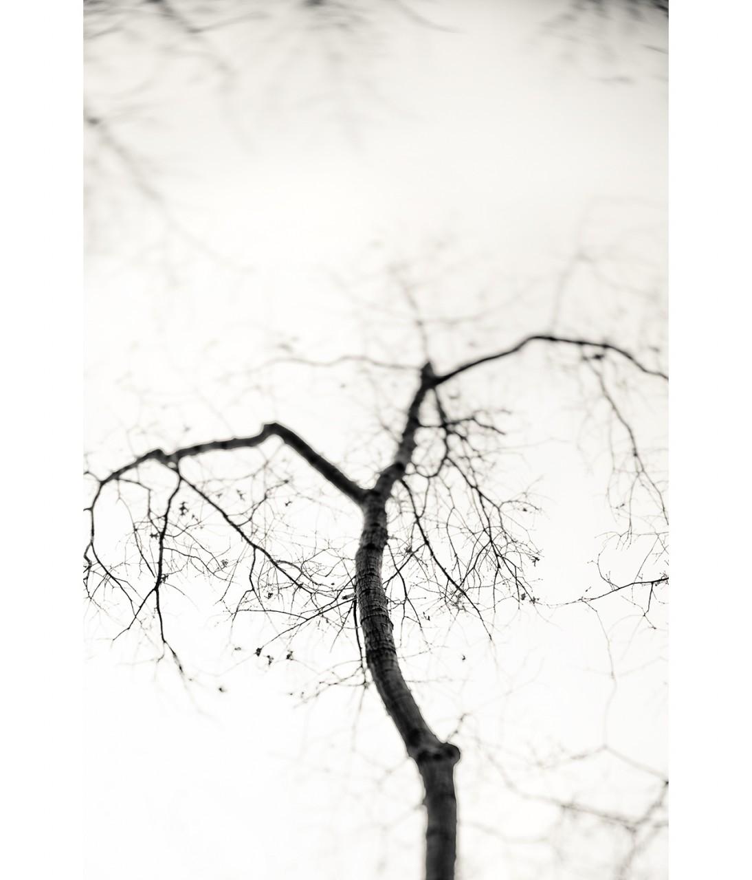 08_pentant tree