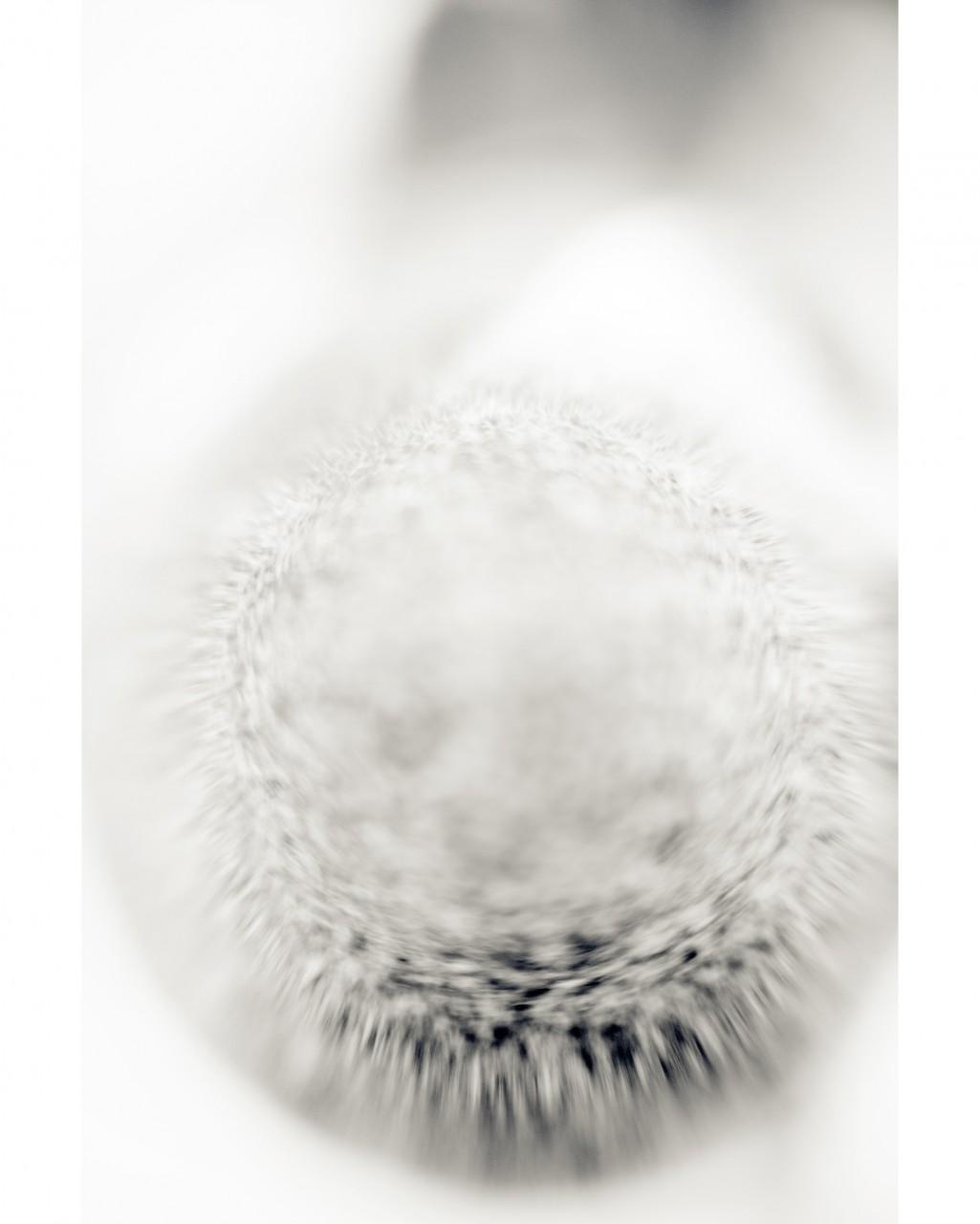 13_White Circle_2818