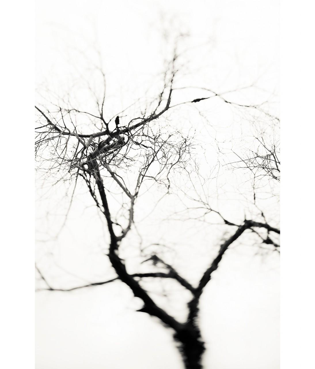 17_Crow