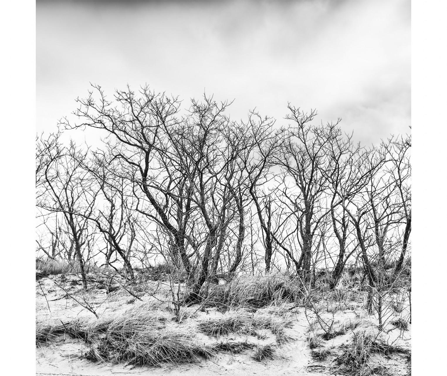 007_WinterBeachTrees
