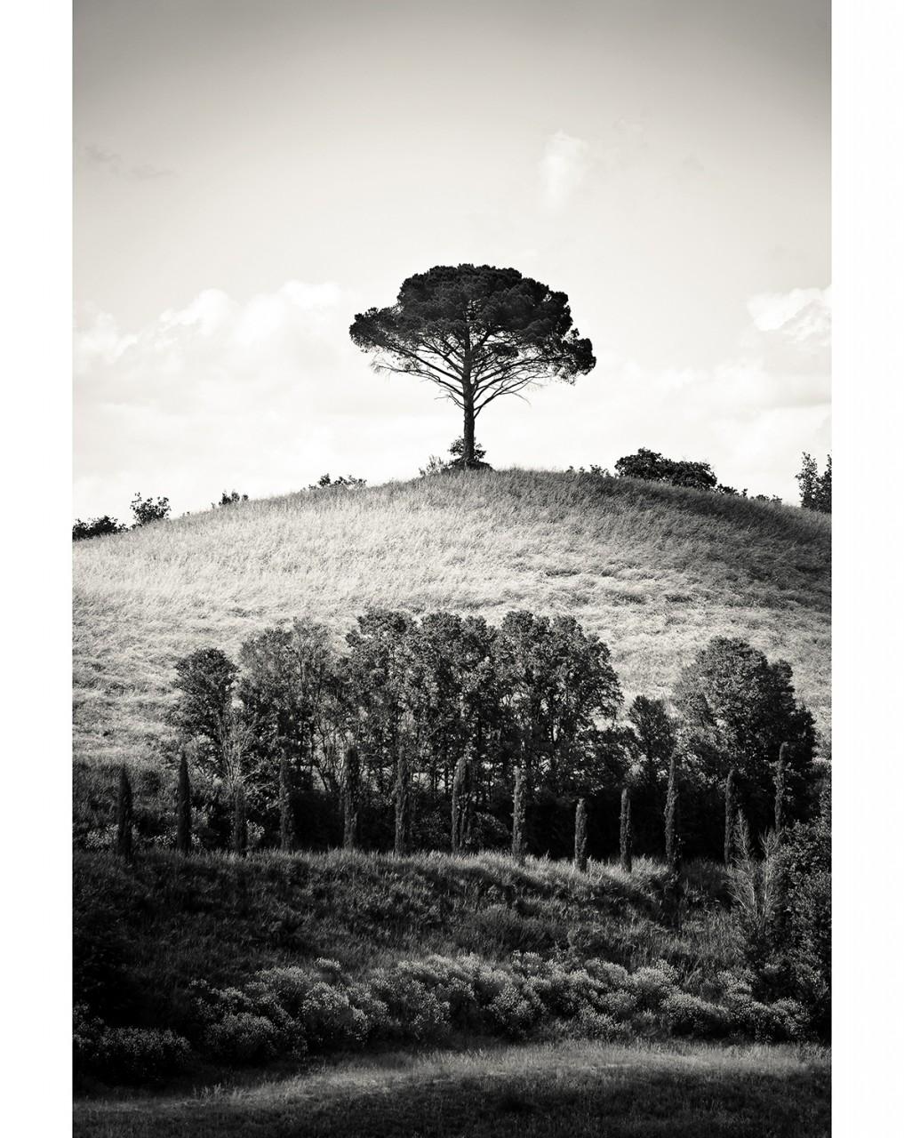023_Tree #1