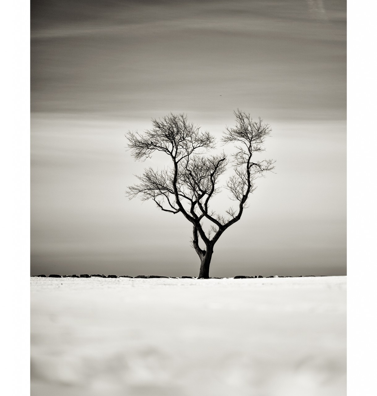 031_WinterTree