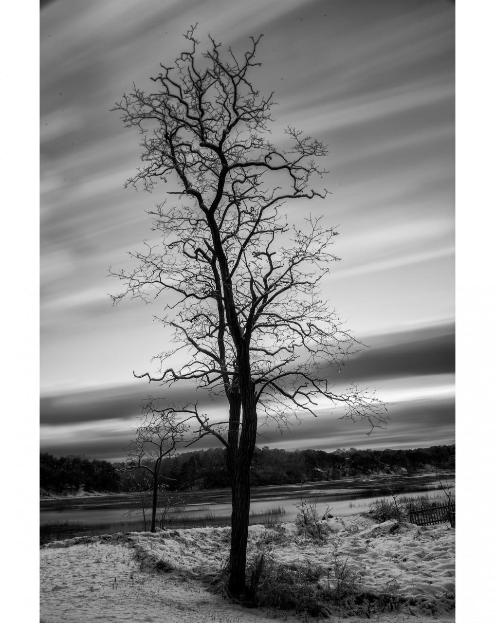 048_Tree